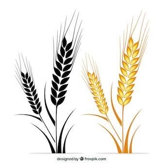 Orelhas do trigo