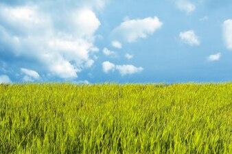 Paisagem bonita com prado e céu