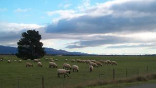 Paisagem da Nova Zelândia no inverno, nz