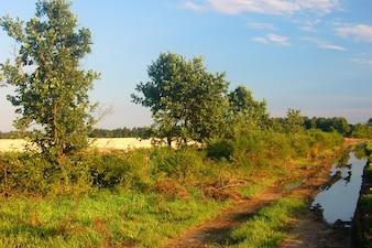 Paisagem tranquilo com árvores e vegetação