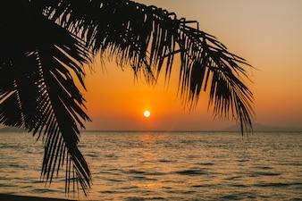 Palmeira de coco com nascer do sol sobre o mar