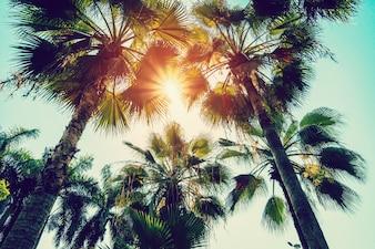 Palmeira de coco e céu azul com filtro vintage.