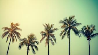 Palmeira de coco na praia no verão com efeito vintage.