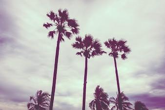 Palmeira na tarde
