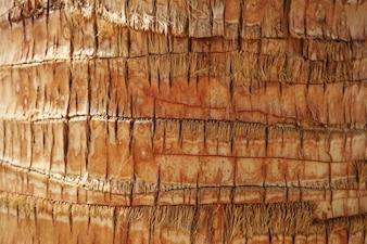Palmeira textura