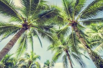 Palmeira visto de baixo