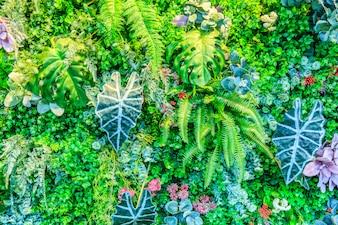 Parede da planta de flores