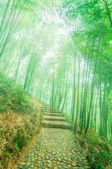 Parque grama calmo beleza zen