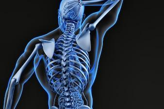 Parte superior das costas e sistema esquelético masculino. Ilustração 3D