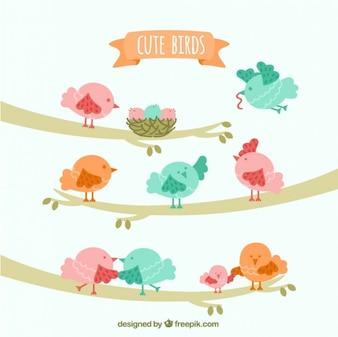 Pássaros bonitos em ramos