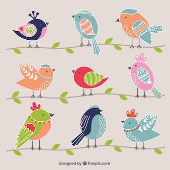 Pássaros bonitos