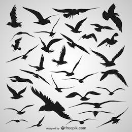 Pássaros silhueta vôo