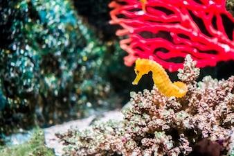 Peixe em subaquático