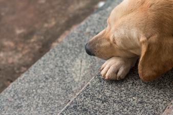 Perto do cachorro marrom cair na escada
