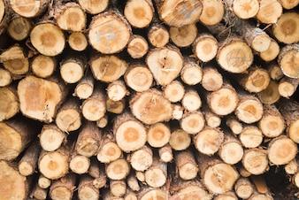 Pilha de toras de madeira