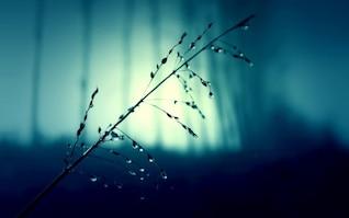 Pingos de chuva em plantas ramos