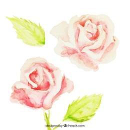 Pintados à mão rosas
