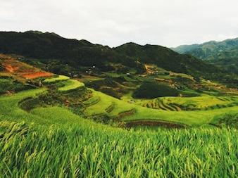 Pisada paisagem da montanha