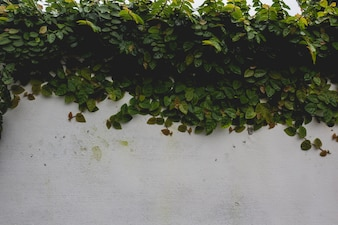 Planta cobrindo uma parede