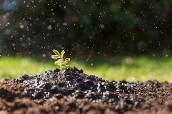 Planta recém-regadas