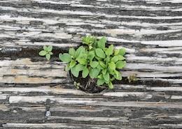 Planta verde na madeira