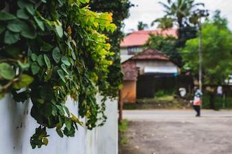 Plantas crescendo em uma parede