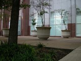 plantas de maconha em pé em uma varanda