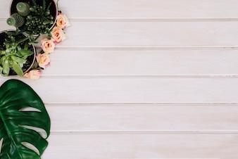 Plantas e folhas em superfície de madeira com espaço