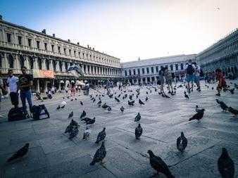 Pombos praça