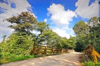 Ponte de madeira com árvores frondosas