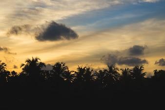 Por do sol atrás de silhuetas de palmeiras