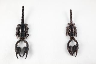 Preto isolamento escorpião insetos par