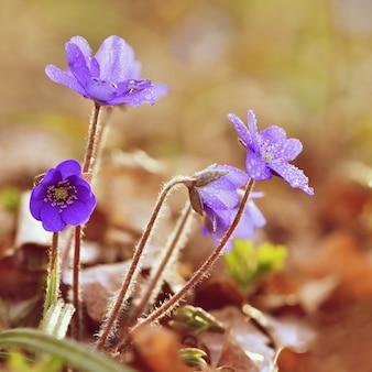 """""""Flores azuis em pingos de chuva"""""""