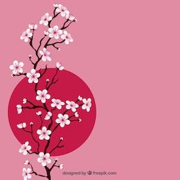 Ramo com flores de cerejeira