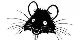 Rato com imagem dentes grandes