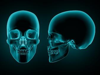 Renderização 3D de uma vista frontal e lateral de uma caveira