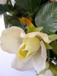 rosa branca, falsificação