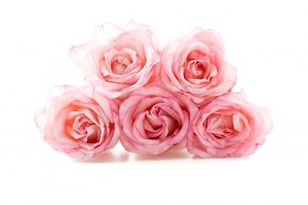 Rosa rosa e branco