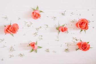 Rosas cor-de-rosa e pequenas flores brancas no fundo branco