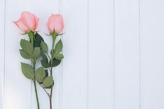 Rosas no fundo de madeira branca