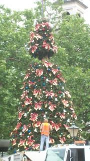 árvore de natal - Dunedin 2008