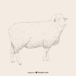 Sheep esboço ilustração
