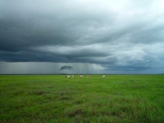 Sheeps atrás de um céu tempestuoso