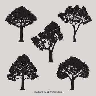 Silhuetas da árvore