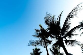 Sillhouette palmeiras