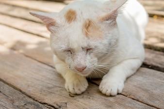 Soft focus of white cat