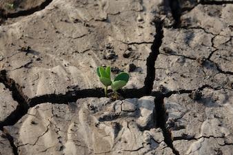 Solo terra rachada com uma planta