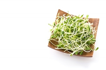 Sprouts do girassol