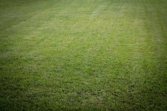 Terra de campo verde para desenvolvimento