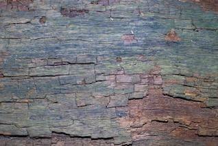 textura da casca, madeira serrada